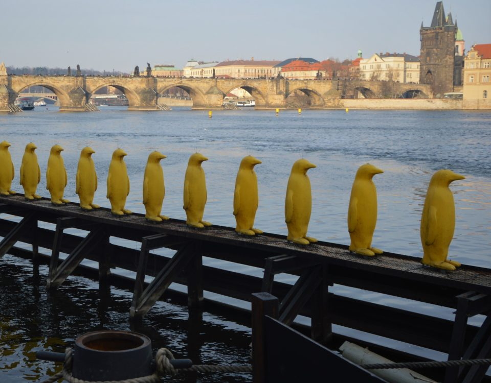 pn-yellow-prague-penguins