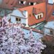 Prague in spring, with blossoming trees